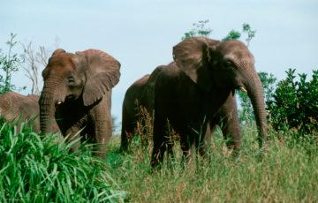 【WDW旅行記9】まるでアフリカ!キリマンジャロサファリを朝一で満喫!